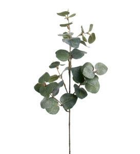 Eucalyptus med is 70cm